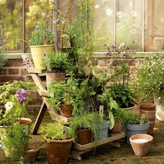 Tray ladder displays numerous plants.