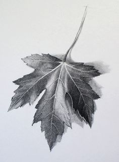 "Watch ""How to Draw a Leaf"" Video Lesson to discover all you need to know How to Draw a Leaf. Drawing Academy presents in-depth info on How to Draw a Leaf"