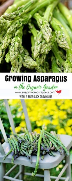 Growing your own Asparagus - Snapshots and Snippets