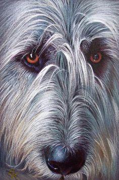 Thinking I want one when we get moved!Irish Wolfhound