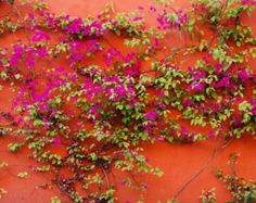 Flower Photography Mexico Photograh Shabby Chic Bougainvillea Photo Red Wall Allende Bohemian Print lat15