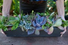 DIY | Succulent floral arrangement | Add rocks to trough, remove plants from their pots, shake off a bit of dirt to loosen roots & place them directly on the rocks. Succulents love breathing room. Add air plants last - they tuck in easily, fill in the gaps & don't have to touch soil!
