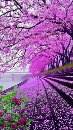 Love Couple Photo, Couple Photos, Beautiful Morning Messages, What To Do When Bored, Spring Has Sprung, Cardcaptor Sakura, Pink Flowers, Serenity, Vineyard