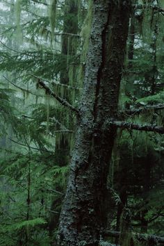 Forest Tree iPhone Wallpaper