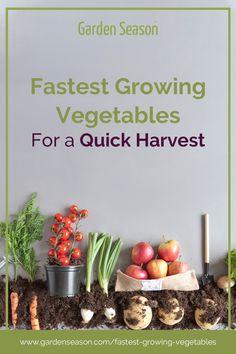 Fastest Growing Vegetables for a Quick Harvest Planting Radishes, Vegetable Garden For Beginners, Vegetable Gardening, Fast Growing Vegetables, Just Eat It, Food Staples, Harvest, Herbalism, Hacks