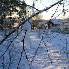 Mias Landliv: The first snow