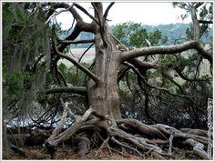 1000 Images About Skidaway Island Ga On Pinterest