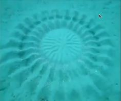 Intricate #underwater artistry made by a pufferfish