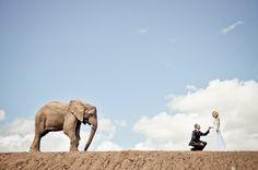 Elephant Wedding par Albert Bredenhamn