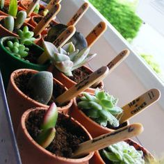 How to Have an Eco-Friendly Wedding - I like the seed packet idea for favors