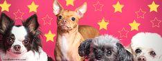 Goodbarkreviews - Home Dog Flea Remedies, Dog Grooming, Fleas, Health, Dogs, Animals, Animales, Health Care, Animaux