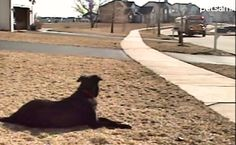 Dogs always give the best welcome home greetings! With their tails wagging, they shower you with hugs and kisses! The dog in the video below is so excited to see his best buddy arrive home from school. So he patiently …