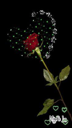Beautiful Flowers Wallpapers, Beautiful Rose Flowers, Beautiful Nature Wallpaper, Love Wallpaper, Love Flowers, Roses Gif, Flowers Gif, Kiss Me Love, Love You Gif