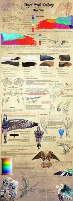 Winged People Anatomy: Wing Design by Blue-Hearts.deviantart.com on @DeviantArt
