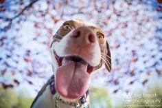 Kaylee Greer est un talentueux photographe animalier de 30 ans basé à Boston, dans le Massachusetts. Kaylee, qui a fait de son rêve une réalité et sa passion est contagieuse ! La preuve en images ! Similar postsSexe et nourriture ou le food-porn vu par Sarah BahbahMermaid Swims in a Sea of 10,000 BottlesBassam Allam …