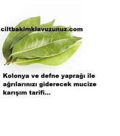 Refined laurel laurel Source by seheryldzkarayaz Medicinal Plants, Plant Leaves, Medicine, Health Fitness, Blog, Herbs, Allah, Karma, Decor