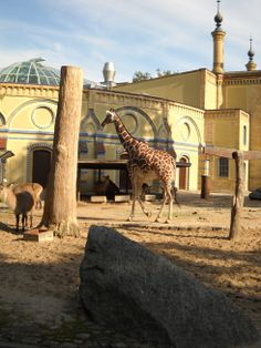 The Berlin Zoo - always worth a visit