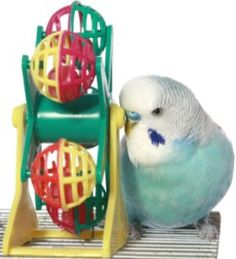 Budgie with toy