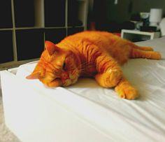 ... Cats, Animals, Gatos, Animales, Animaux, Animal, Cat, Animais, Kitty
