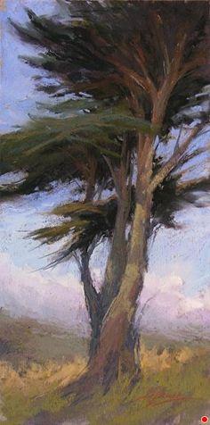 Coastal Cypress by Kim Lordier Pastel ~ 16 x 8
