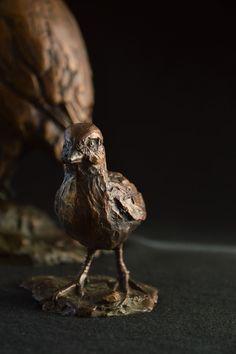Swainson's Spurfowl (Francolin) - Chick 100 x 90 x x 85 mm, 1.5kg