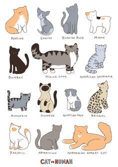 Cat Versus Human, Cat Breeds.