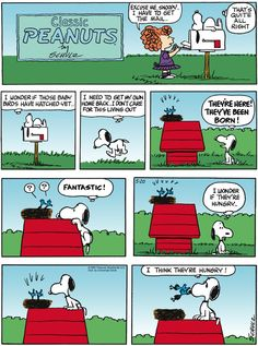 Today on Peanuts - Comics by Charles Schulz Snoopy Cartoon, Snoopy Comics, Peanuts Cartoon, Peanuts Gang, Peanuts Comics, Snoopy Love, Snoopy And Woodstock, Funny Cartoons, Funny Comics