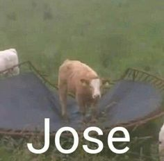 Memes Estúpidos, Stupid Memes, Stupid Funny, Funny Memes, Hilarious, Jokes, Reaction Pictures, Funny Pictures, Funny Animals