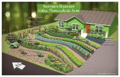 Design of Nature's Harvest Permaculture Farm. Converting lawn to garden.