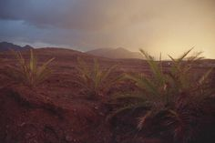 Canary islands, their perfect weather all year long, their arid landscapes and their mountains that overhang the whole with a majestic aspect make thousands of Landscape Photography, Art Photography, Canary Islands, Landscapes, Journey, Mountains, Sunset, Places, Travel