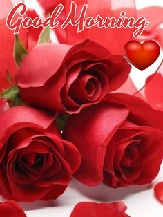 55 Good Morning Rose Flowers Images Pictures With Romantic, Red Roses Good Morning Romantic, Lovely Good Morning Images, Good Morning Roses, Good Morning My Love, Good Morning Picture, Morning Pictures, Morning Pics, Morning Greetings Quotes, Good Morning Messages