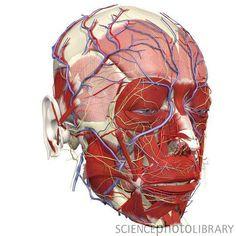 Facial numbness fibromyalgia