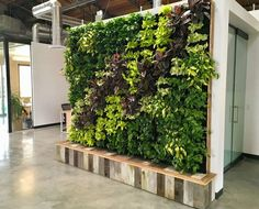 A luscious green plant wall at Yoobi headquarters cleans the air while it adds oxygen. This custom Florafelt vertical garden created by Tucker Warner recirculates water from a storage tank at the base that is cleverly hidden with a beautiful enclosure of reclaimed wood.  Tucker Warner, CSBA, LEED GA, FE - Design - Build - Consult Contact: 802-355-2459 - tuckerhwarner@gmail.com