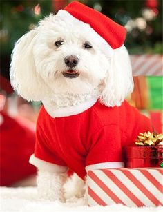 30 best 2013 Christmas gifts for pets images on Pinterest ...