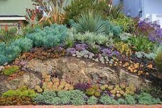 Galeria de imagens de lindos jardins de suculentas de David Feix Landscape Design. Para aqueles que desejam entrar em contato aqui  está o ...