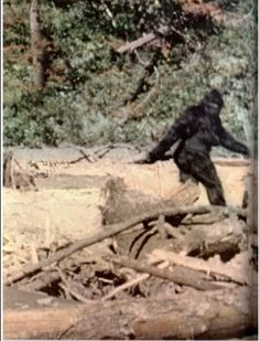 I Love bigfoot videos and documentaries Patterson/Gimlin photo