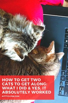 If you're here, my guess is you've came across this article because you were looking for a solution to a problem you already have, or one you're expecting to have in the upcoming months. Either you've taken in multiple cats, and at least one of them doesn't get along with another, you've just adopted a second cat, or you're hoping to adopt kitty #2 … Cat Behavior Problems, Cardboard Cat Scratcher, Pet Care Tips, All About Cats, Cat Facts, Cat Grooming, Cat Life, Cat Toys, Cats And Kittens