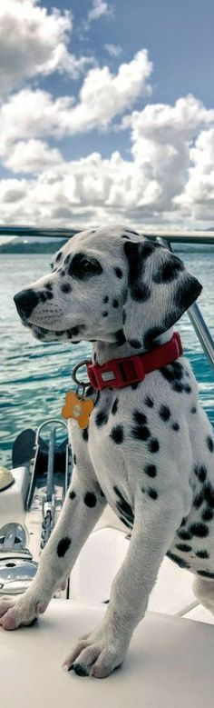 Join the dots and you'll find that only the best of paradise awaits you on www.e… Rejoignez les points et vous constaterez que seul le meilleur du paradis vous attend www. Animals And Pets, Baby Animals, Cute Puppies, Dogs And Puppies, Pet Dogs, Dog Cat, Doggies, Cute Creatures, Cute Funny Animals