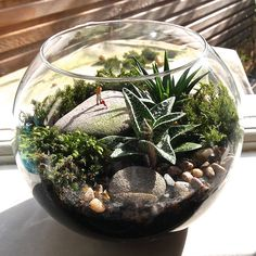 mini world terrarium kit hoovering by london garden trading   notonthehighstreet.com