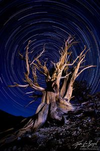 Bristlecone Pine Light Painting and Star Trails, White Mountains, California, essence of time By: Floris Van Breugel