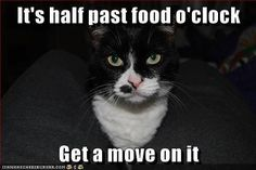 Food o'clock... I love that! - Tap the link now to see all of our cool cat collections!