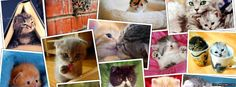 Kittens collage
