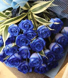 Blue Rose: Mystery - Mysterious beginnings of a new events Occasion: New Baby, New Job, New Home