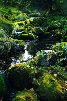 creek between mossy stones - beautiful images and wallpapers Beautiful World, Beautiful Places, Building A Pond, Natural Pond, Fantasy Forest, Forest Landscape, Tree Forest, Nature Pictures, Amazing Nature