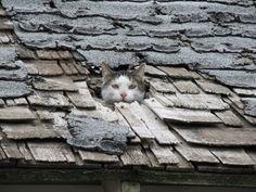 "Oscar The Cat Pops Up To Say ""Hi"""