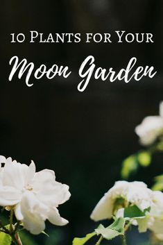 patio plants A list of 10 night-blooming plants and plants with white flowers to use in your moon garden. Witchy Garden, Gothic Garden, Garden Whimsy, Night Blooming Flowers, Blooming Plants, Flowering Plants, Summer Flowers, Herb Garden, Garden Plants