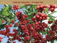 CAFÉ DE COLOMBIA...........SU AROMA LO MEJOR DEL MUNDO www.chispaisas.info/paisaje8.htm  www.chispaisas.info https://plus.google.com/111825915929583877697/posts
