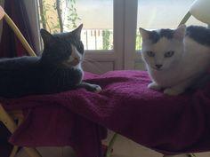 L'amour entre 2 chats, douceur, calme, sérénité, tendresse!!!
