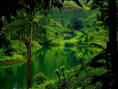 Nuwara Eliya, Sri Lanka. this is where all the fairy tales characters live. hehehe