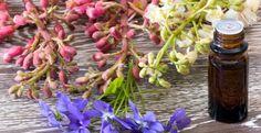 Bachblüten / Bachblütentherapie bei der Katze